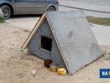 В Чувашии построят четыре приюта для бездомных собак